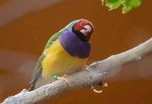 Tierpark Hagenbeck: Öffnung Saison 2021 für den 14. März geplant