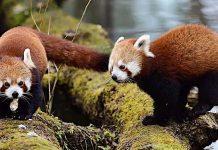 Tierpark Hellabrunn: Öffnung am 8. März 2021 mit Corona-Regeln