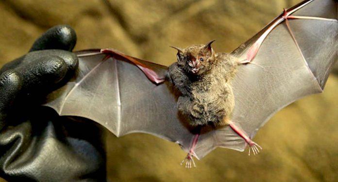 Tierpark Hellabrunn: Fledermausgrotte muss dauerhaft geschlossen werden