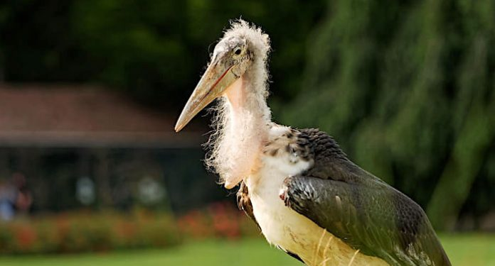 Weltvogelpark Walsrode: Wiedereröffnung nach der Winterpause