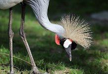 Corona: Zoo Hannover geschlossen, Zoo Osnabrück öffnet