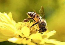 Bundesministerium: Gratis Lexikon über bienenfreundliche Pflanzen