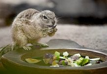 Corona: Tierparks und Zoos in Thüringen öffnen wieder