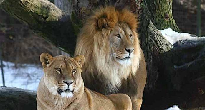 Ostern 2021: Zoo, Tierpark, Museum: Wohin zu Ostern trotz Corona?