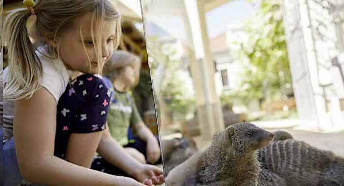 Tierpark Görlitz: Dank Corona-Schnelltests wieder Besucher im Zoo