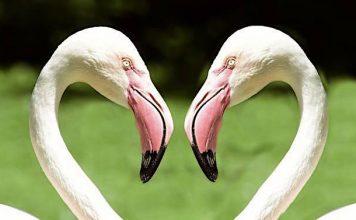 Tierpark Hagenbeck: Existenz durch Corona nicht gefährdet