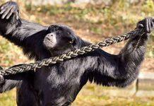 Hellabrunn: Tierpark muss wegen Corona ab Ostern 2021 wieder schließen