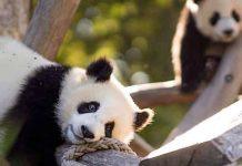 Zoo Berlin: Mitarbeiter müssen wegen Corona-Verlusten entlassen werden