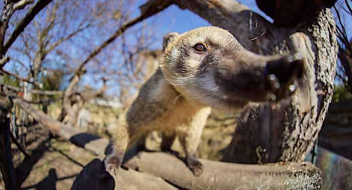 Zoo Dresden: Corona-Schnelltests für Besucher an Wochenenden