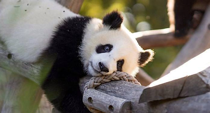 Ratgeber: Die beliebtesten Zoos Deutschlands