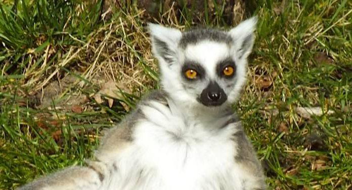 Tierpark Cottbus: Eigene Corona-Teststelle für Besucher eröffnet
