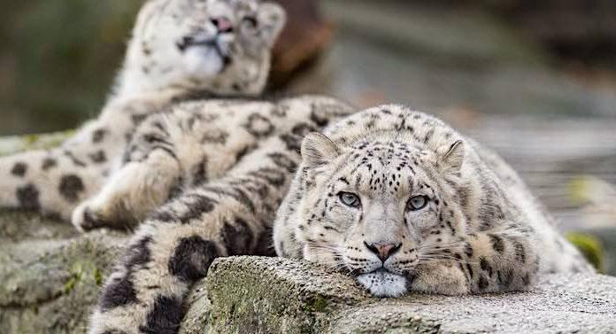 Zoo Basel: Spenden in Millionenhöhe wegen Corona-Pandemie