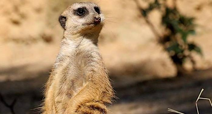 Zoo Duisburg: Corona-Tests kostenlos direkt vor dem Zoo