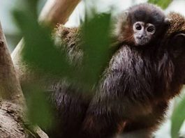 Zoo Magdeburg: Tierischer Nachwuchs in Hülle und Fülle