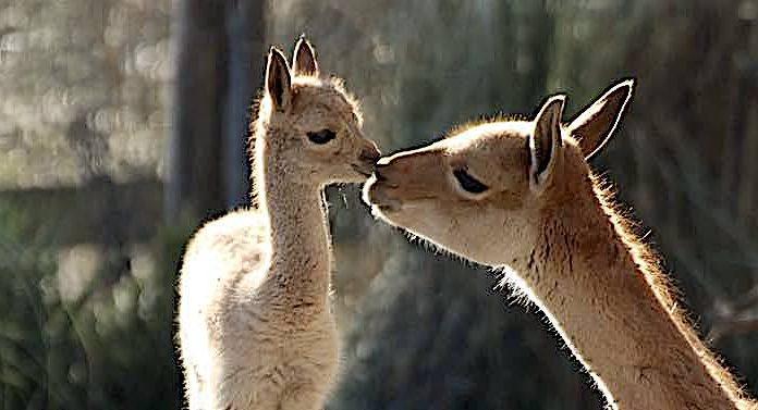 """Zoo Osnabrück: """"Maiabende"""" mit 50 Prozent Rabatt auf Eintrittspreis"""