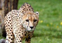 Serengeti-Park: Corona-Testpflicht für Tagesbesuche abgeschafft