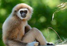 Zoo Berlin: Besuch des Zoos ohne Corona-Testpflicht möglich