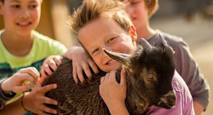 Erlebnis-Zoo Hannover: Rabatt Sommer 2021 für Kinder und Gruppen