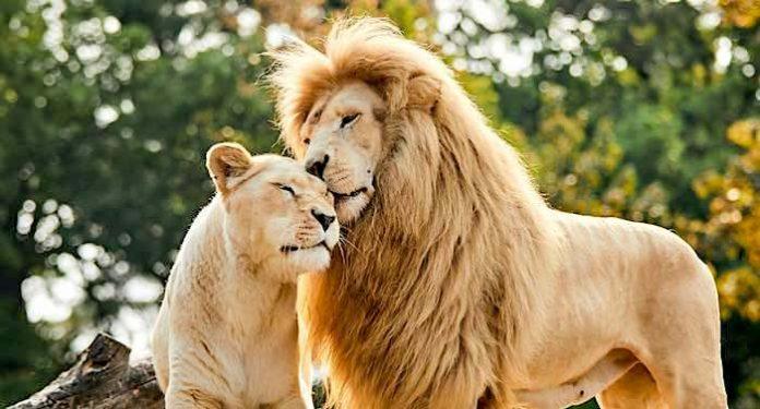 Safariland Stukenbrock Corona-Regeln Sommerferien Juli August 2021