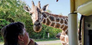 Serengeti-Park Gutschein Ticket und Übernachtung mit 35 Euro Rabatt