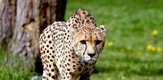 Serengeti-Park Rabatt 50 Prozent sparen mit Rossmann Gutschein 2021