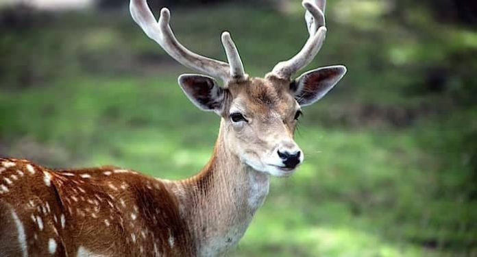 Wildpark Schwarzach Gutschein Saison 2021 mit bis zu 54 Prozent Rabatt
