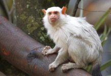 Kölner Zoo verschenkt 2.000 Freikarten an Hochwasser-Opfer