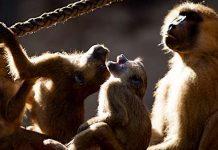 Tiergarten Nürnberg: Zoo Freikarte für Schüler mit Note 1 im Zeugnis