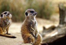 Tierpark Nadermann Gutschein Saison 2021 mit 32 Prozent Rabatt