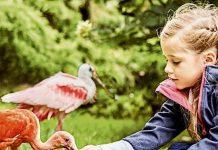 Weltvogelpark Walsrode Gutschein Saison 2021 mit 27 Prozent Rabatt