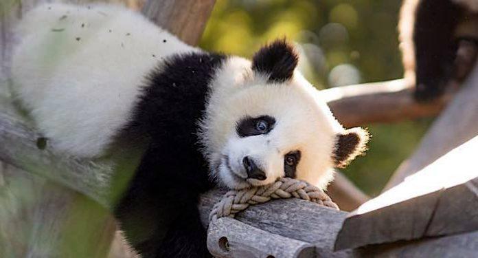 Zoo Berlin: 16,5 Millionen Euro Defizit durch Corona-Pandemie