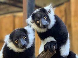 Zoo Veldhoven Gutschein mit 37 Prozent Rabatt pro Person
