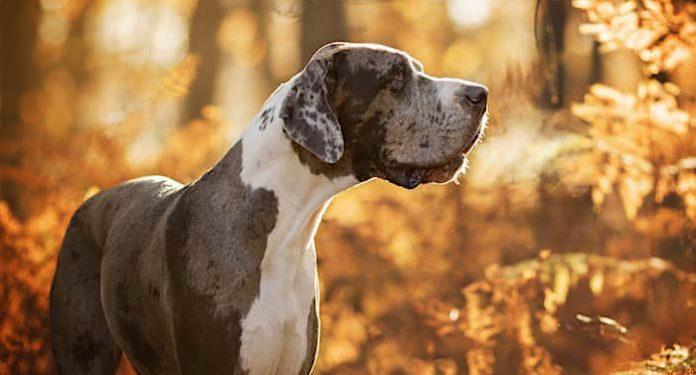 "Bundesregierung: ""Haustierfibel - Entdecke die Haustiere"" kostenlos bestellen"