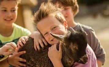 Erlebnis Zoo Hannover: Ausgezeichnet als familienfreundlichster Zoo Deutschlands