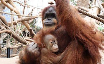 Ratgeber: Gilt eine Mutter mit Kindern ohne Mann im Zoo als Familie?