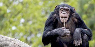 TOGGO Serengeti-Park 50 Prozent Rabatt am Familienwochenende