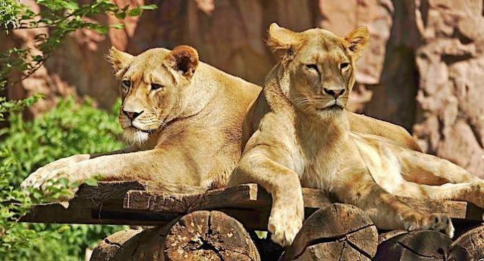 ZOOM Erlebniswelt: Privatperson vererbt Zoo mehr als 120.000 Euro