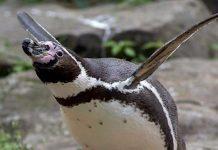 Zoo Berlin: Finanzielle Rettung durch die Stadt hat ihren Preis