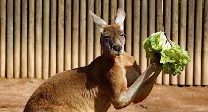 AOK Gewinnspiel: Zoo Dresden Gutschein Jahreskarte kostenlos gewinnen