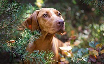 Ratgeber: Tolle Ausflugsziele für Menschen mit Hunden