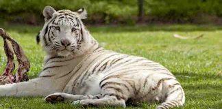 """Serengeti-Park: Abschied von Indoor-Achterbahn """"Safari-Blitz"""""""